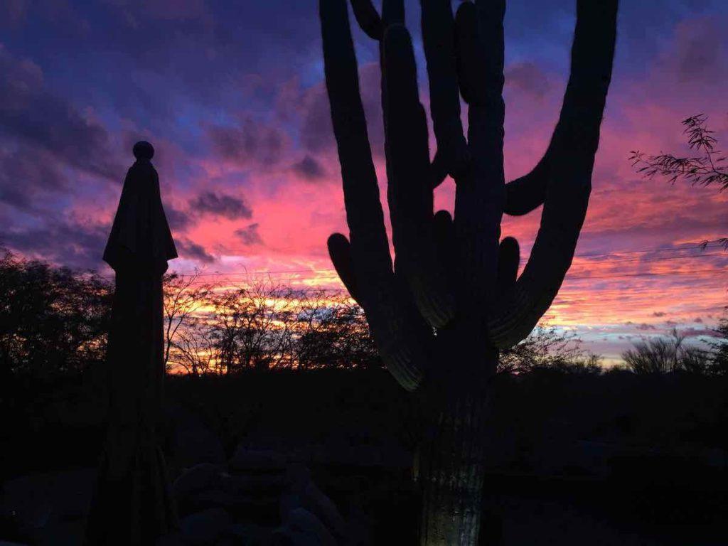 Phoenix Sunset with Saguaro