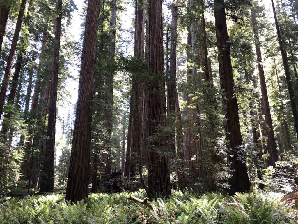 Prairie Creek Hike - Prairie Creek Redwood State Park